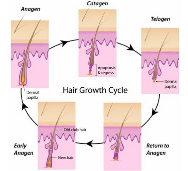 Triệt lông chân vĩnh viễn có khả năng mọc lại không
